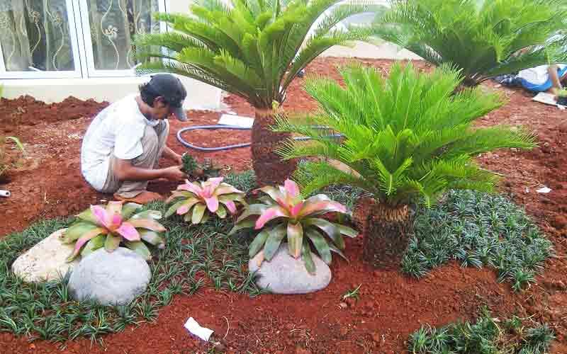 Jasa Tukang Taman di Rasiei
