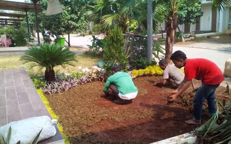 Jasa Tukang Taman di Cilacap